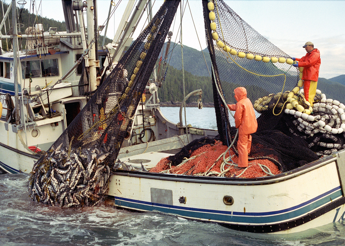 Commercial fishing commercial and sport fishing for What is commercial fishing